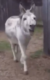 Donkey reunited with old friend…